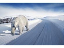 Polarvagn (björn) på vinterväg