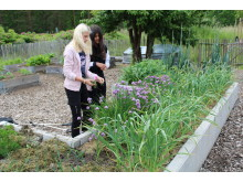 Odla unga odlare- i skolträdgården