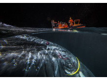 Hunpack whale attached in internet cable - Audun Rikardsen