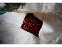 Kaffebar, Hacienda Esmeralda