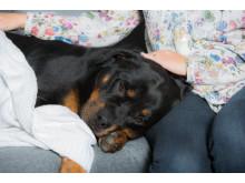 Förkyld hund