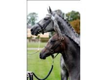 Vill du lära dig mer om hästuppfödning?