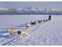 Mit dem Hundeschlitten durch Nordnorwegens Weite