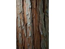 cederträ är rikt på naturliga bevarande oljor