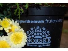 Norskmerket på blomsterpotte