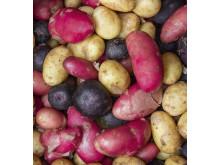 Røde kartofler