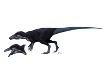Megaraptorn Australovenator wintonensis