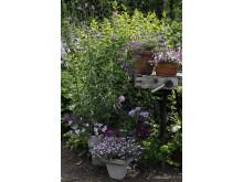 Recept på en lyckad plantering juni-juli