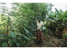 Agroforestry år 3