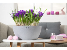Den Frühling begrüßen mit CUBETO