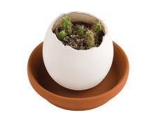 Odlingsset - Egglings