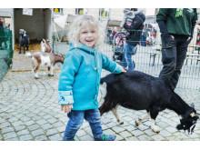 Gettorfer Streichelzoo gehört fest zu den Skandinavien Tagen