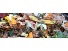 compost-709020