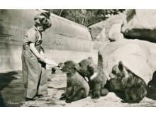 Björnungar på Skansen. Brevkort från 1940-talet.