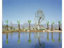 1st_ © Yan Wang Preston, United Kingdom, 1st Place, Professional competition, Landscape , 2019 Sony World Photography Awards (10)
