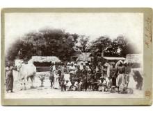 Foredrag Løvejagten 110 år Kredit Zoologisk Haves Arkiv