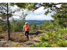 Magnifik orientering och utsikt på bergen i Höga Kusten