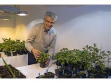Nystartat forskarföretag har ny teknik för giftfri odling