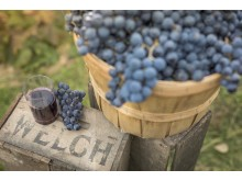 Welch's Global Ingredients Group believes 2018 could be the Year of the Concord Grape