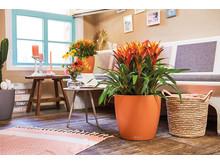Exotische Pflanzen kommen im LECHUZA CLASSICO besonders schön zur Geltung
