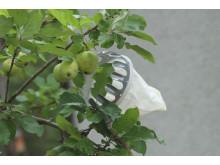 Äppelplockare i träd