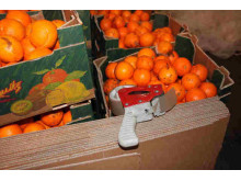 Op Quadrant Oranges used as coverload for smuggling