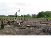 Skogsskövling hejdas med klimatkompensation