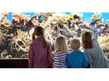 Framför akvariet