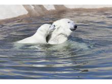 Ranua Polar Bear Cub  5