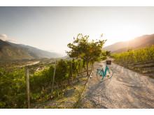 Walliser Weinweg bei Salgesch