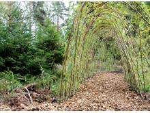 Myternas skog - Piltunnel