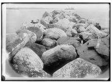 Moloen, Tjørvebugten