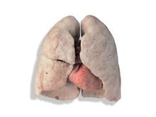Den friska lungan