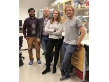 Forskargruppen bakom den nya studien: Dayanand Kalyali, Henrik Aspeborg, Christina Divne, Tom Reichenbach.