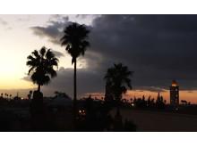 Marrakech palm trees sunset_Source NOSADE
