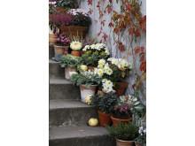 Recept på en lyckad plantering oktober