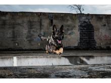 Årets polishund 2016 är Grym!