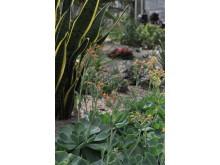 Formstarka och saftiga suckulenter, del i utställningen Kaktus i kubik, signerad Trädgårdsföreningen