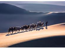 PangXiaoZhong_China_Camel train_2019