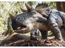 Knuthenborg Safaripark:  Dinosaurier-Wald - Triceratops2