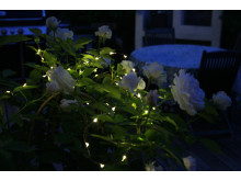 Solcellsladdad ljusslinga - Blommor