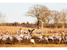 Cranes standing on a field in spring sun - Photo C (1)