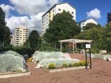 Stadsodling - Brunnsbo trädgårdskollektiv