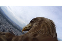 Action Cam Eagle View