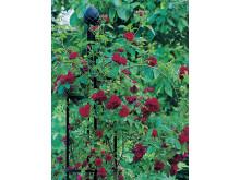 Obelisk I, sanslöst vackert i din trädgård
