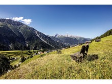 Wanderbänkli Davos Wiesen