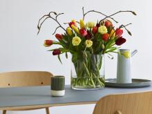Tulipaner og magnolia