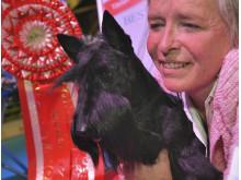 Best in show i MyDOG 1 blev en Skotsk Terrier, Raglan Rachel Rose, ägs av Cristiana Capece