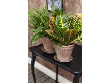 Terracottakrukor med växter