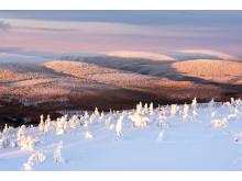 Snedækket landskab, Stöten i Sälen